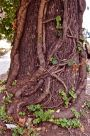 THE TWISTED TREE — Pick Pic Of The Week