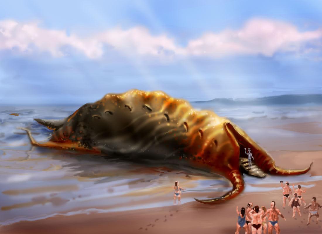 giant sea slugs | SMILINGBAGEL