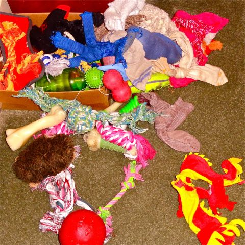 The search for the missing perfect toy.