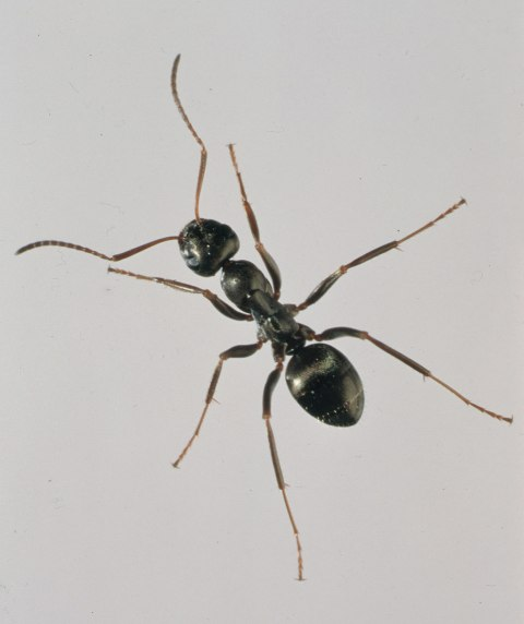 ANT real