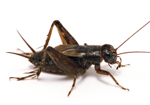 insect E1