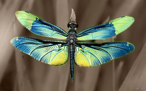 Summer beautiful dragonfly wallpapers 1920x1200 10