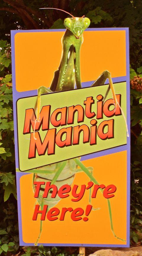 MantidMania