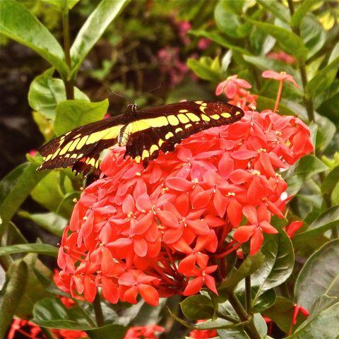 RedFlowerButterfly