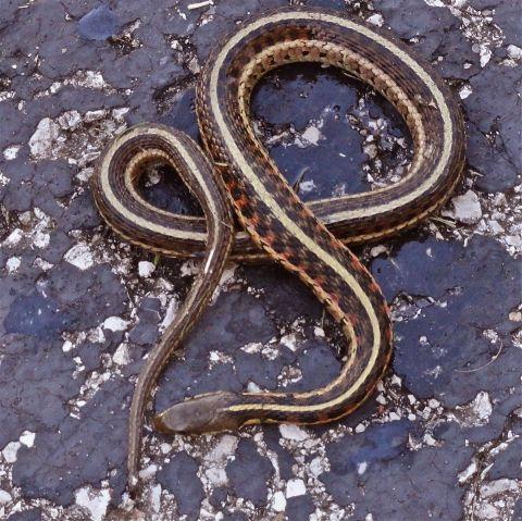 Renee's Snake