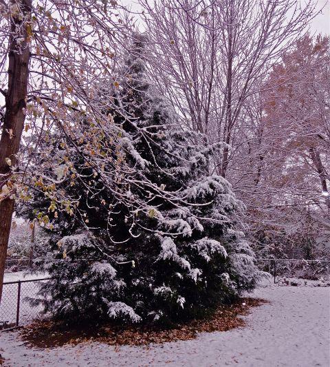 WinterWoods2