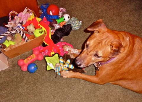 Renee's Toy Box